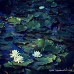Lydia_Theunissen_Plants_Flowers