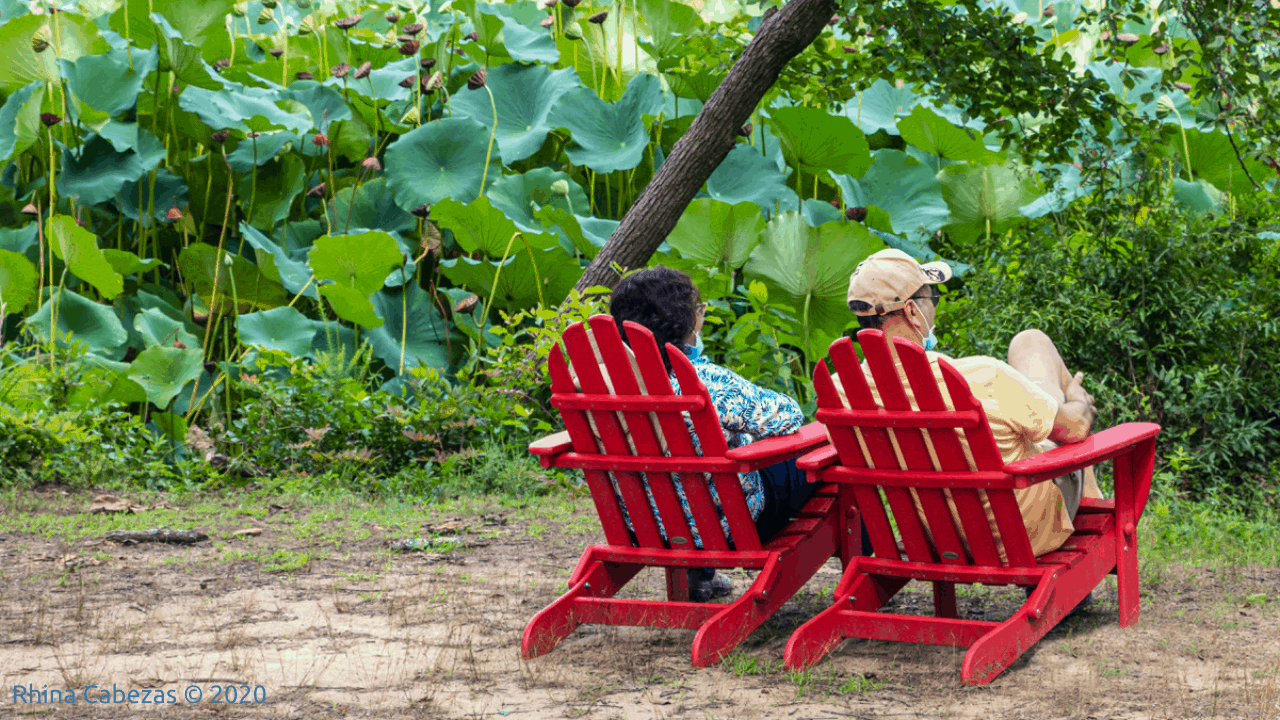 photo of two people in red adirondack chairs facing the lotus ponds at kenilworth aquatic gardens