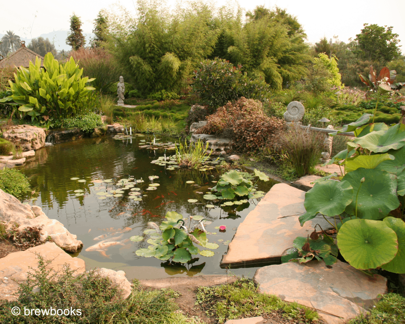 Photo of a garden design pond with aquatic landscaping. There are koi fish and many types of aquatic plants in the garden, including lotus. Photo by brewbooks.